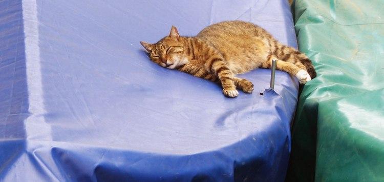 Cat sleeping on boats in Manarola